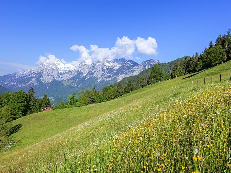 Naturidylle: blühende Wiesen und Berge