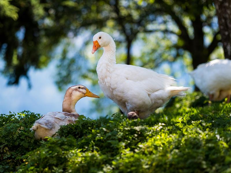 Unsere Tiere lassen Kinderaugen funkeln