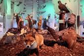 Ausstellung Vertikale Wildnis